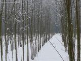 Naziv slike:drvored
