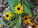 Naziv slike:Žuti cvit