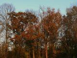 Naziv slike:boje jeseni