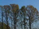 Naziv slike:drveće