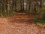 Naziv slike:put posut lišćem