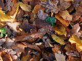 Naziv slike:lišće